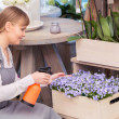 Florist spraying water onto a floral arrangement — Stock Photo #68191059