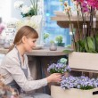 Florist examines flowers — Stock Photo #68191155