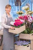 Florist holds a wooden flower basket — Stock Photo