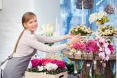 Florist arranging pots — Stock Photo