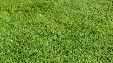 Close-u of putting golf ball on field — Stockvideo