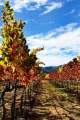 The vine with the colors of autumn — Foto Stock