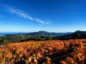 The vine with the colors of autumn — Stock fotografie