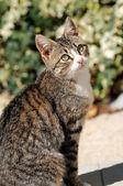 The cat — Stock Photo