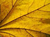 Yellow leaf texture — Stock Photo