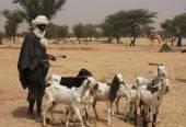 African shepherd  — ストック写真