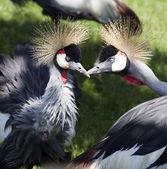 怒っている鳥 — ストック写真