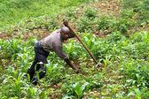 Rwanda — Photo