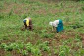 Rwanda — Zdjęcie stockowe