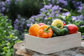 Wooden box with fresh vegetables — Stock Photo