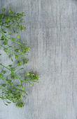 Chinese cress on wooden background — Stock Photo