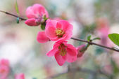 Spring pink flowers background. — Stock Photo
