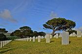 National cemetery with gravestones — Stock Photo