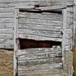 Dilapidated old barn door — Stock Photo #64381625