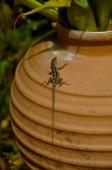 Lizard crawling on a a pot — Zdjęcie stockowe