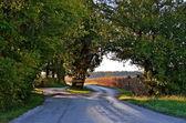 拆分铺的公路因一棵树 — 图库照片