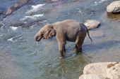 Drinking Elephant in Lake — Stock Photo