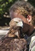 Brown Tawny Eagle portrait with Falconer — Stock Photo