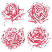Roses Drawing set 002 — Stock Vector