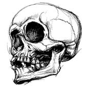Skull Drawing line work vector — Stock Vector