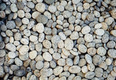 Sea stone background — Stock Photo