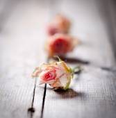 Dried rose buds on a wooden background — Stock Photo