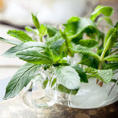 Bergamot and mint leaves — Stock Photo