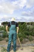Farmer looking his urban vegetable garden — Stock Photo