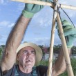 Farmer preparing canes — Stock Photo #55361339