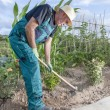 Farmer working the land — Stock Photo #57707677