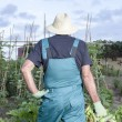 Farmer with a basket of vegetables — Stock Photo #60802847