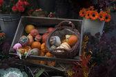 Decoratieve pompoenen — Stockfoto