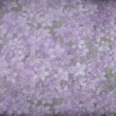 Campanula muralis background — Stock Photo