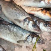 Gilt-head bream fish — Stock Photo