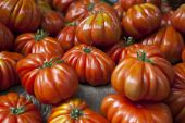 Lufa Farms Beefsteak Tomato. Market stall with lots of tomatoes — Stockfoto