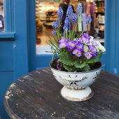 Colorful fresh spring primrose flowers in the pot on the wooden table in the street cafe — Stock Photo