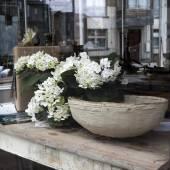 Hydrangea flowers — Stock Photo