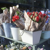 Red tulips and blue hyacinths  — Stock Photo