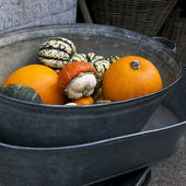 Pumpkins in zinc basket. — Stock Photo