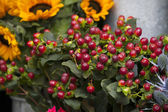 Red hawthorn with sunflowers — Stock Photo