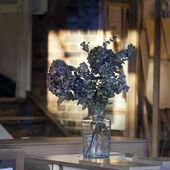 Bouquet of eucalyptus in vase — Stock Photo