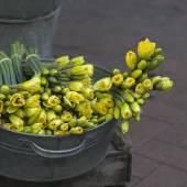 Yellow daffodils  in zink bawl — Stock Photo