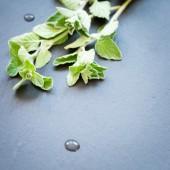 Fresh oregano on a dark stone background — Stock Photo