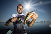 Angler with perch — Stock Photo