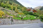 Typical dark brick Andorra house with grazing cows — Stock Photo