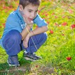 8 year old boy with in a field of wild red flowers — Stock Photo #63630643
