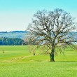 The Swiss Countryside — Stock Photo #72439197