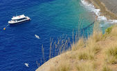 Mediterranean coastal vegetation — Stock Photo