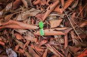 Droge leaf Fall op de vloer — Stockfoto