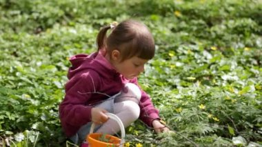 Little girl admires and smelling spring flowers — Stock Video